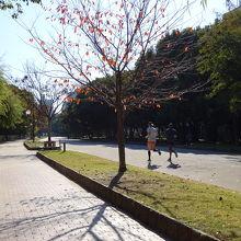 ジョギング道