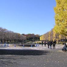 噴水広場と両側の銀杏並木
