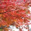 色とりどりの紅葉が見られる