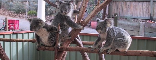 真冬のオーストラリア旅行Vol.3 inブリス...