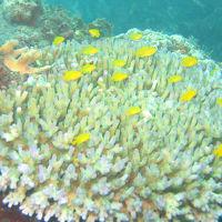 【ダイビング旅行vol.3】 フィリピン セブ島