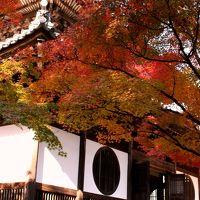原チャでゴー第46弾−岡山の小京都…って何で京都に媚びる訳? 宝福寺の秋−