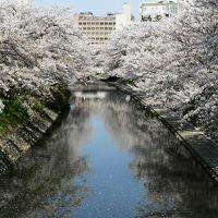 日本の旅 東北・中部地方を歩く 富山市の富山城跡周辺の光景