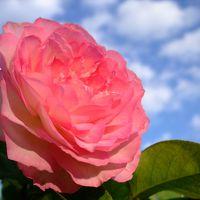 2009 秋のお花見ドライブ その3 ≪湧永庭園≫