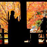 長谷寺 紅葉真っ盛りの。