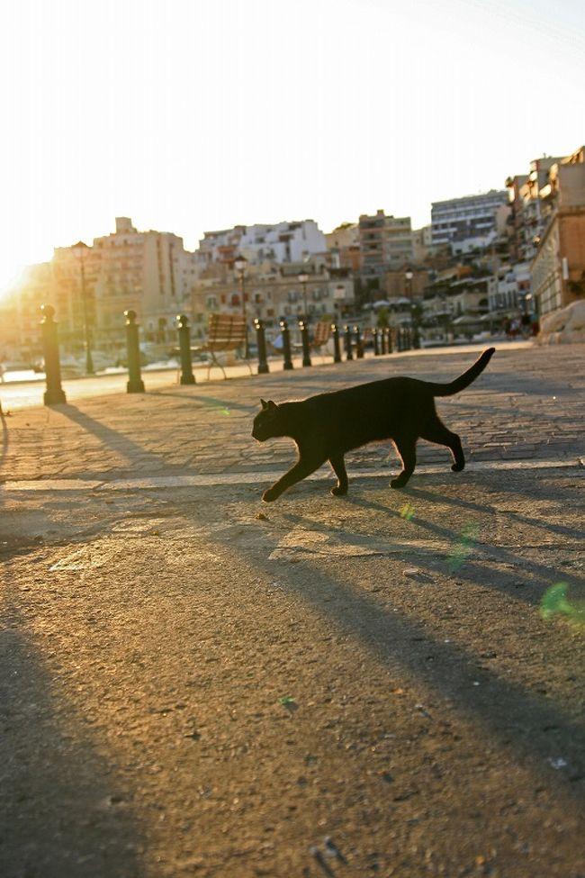 午後から再び猫探し散歩スタート<br />前々から会ってみたかった噂のキャットマンにも出会えたし港の猫にもたくさん出会えて大感激<br /><br />≪今回の旅行記一覧≫<br />2010/9/17<br />地中海猫探しの旅◎リマソール1日目CyprusCATSの歓迎◎<br />http://4travel.jp/traveler/europeomu/album/10508942/<br />2010/9/18<br />地中海猫探しの旅◎リマソール2日目 憧れの猫修道院◎<br />http://4travel.jp/traveler/europeomu/album/10510206/<br />2010/9/19<br />地中海猫探しの旅◎Malta1日目 Sliema夜の公園猫探し◎<br />http://4travel.jp/traveler/europeomu/album/10511201/<br />2010/9/20<br />地中海猫探しの旅◎Malta2日目 ヴィットリオーザの街を歩く◎<br />http://4travel.jp/traveler/europeomu/album/10514140/<br />2010/9/20<br />地中海猫探しの旅◎Malta2日目つづき 猫大漁◎<br />★今ご覧頂いてる旅行記です★<br /><br /><br />***************************<br />★告知★写真展開催 (2011/4/6追記)<br />【マルタねこ2】― 地中海ねこ探しの旅2010 ―<br />All photo by.omu<br />今回2010/10月に撮り歩いたマルタ共和国(マルタ島)で撮った猫写真がメインですが、同時に旅行したキプロス共和国(キプロス島)での猫写真も一部展示予定<br />是非ご来場お待ちしています<br />★場所:catteria cloud nine(大阪/東三国) <br />http://catteria-cloud9.com/top.html<br />カフェブースおよび猫ブース<br />★期間:2011年4月26日(火)〜5月15日(日)<br />* 5/2・9(月)は定休日<br />※イベント詳細は「blog命みじかし旅せよ乙女」でご確認下さい<br />http://omushimejitrip.blog71.fc2.com/blog-entry-54.html<br />★今回の写真展開催に際しマルタ観光局HP上でもバナーリンク協力頂いております <br />http://www.mtajapan.com<br /><br />