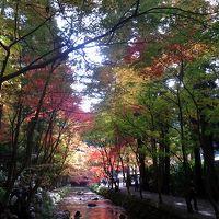 魂の宿る小國神社 渋滞の紅葉狩りバス乗りツアー15時間 (香嵐渓へ)