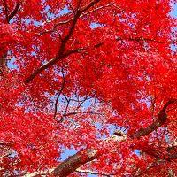 修禅寺庭園 今年も期間限定で公開されました。
