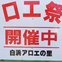 下田市白浜のアロエ祭り
