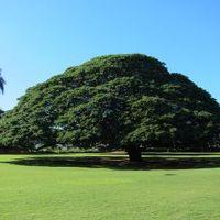 ハワイ旅行記 2011 �ダウンタウン&モアナルアガーデン