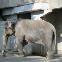 象のはな子に会いに。井の頭自然文化園へ