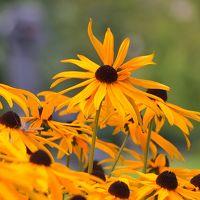 夏の名残のお花たち in バンクーバー@ウォーターフロント