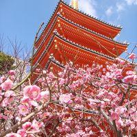 九州の旅:福岡編