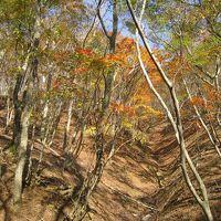 鈴鹿の秋は深く色づいて