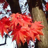 秋色の札幌・小樽