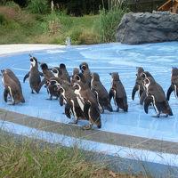 こども動物自然公園(2011年10月)