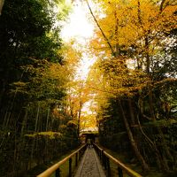 色葉にほふ京都旅行�:光悦寺、常照寺、源光庵、高桐院、瑠璃光院、北野天満宮