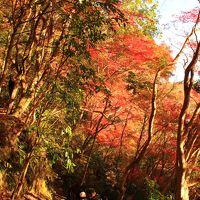 市原/木更津ぐるり旅【8】~関東一遅い紅葉~もみじ谷&大福山展望台