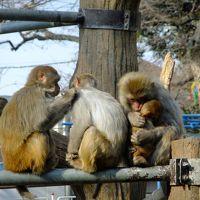 吉祥寺を散策〜井の頭恩賜公園と井の頭自然文化園