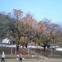岡山隠れ紅葉の名所めぐり!
