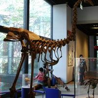 ミュージアムパーク自然博物館見学&周辺バードウォッチング [2011](3) 魚類・鳥類編