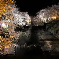 七谷川の夜桜を見に行きました