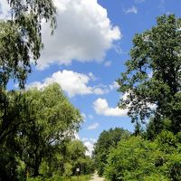 新緑のカナダ フランコフォンとアングロフォンを訪ねて 7 Tronto 森の中の暮らし