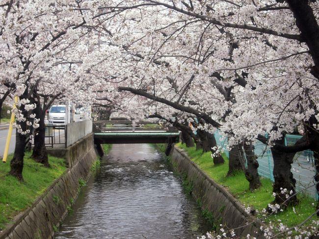 今年はジャストシーズンに花見を!と春を待ち望み、4月8・9日は東京の花見に決めていましたが、<br />その前日、「地元の人しか知らないいいところがある」と2号が会社の方に聞いてきました。ならば、東大阪まで行ってみましょう。