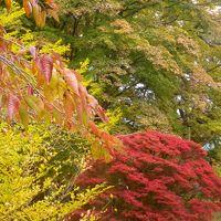 紅葉と黄葉に包まれてーーーー;秋色に萌える甲州路