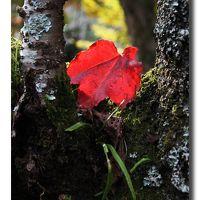 Solitary Journey [1119] 赤・黄・みどり・・・鮮やかな秋の彩りを楽しむショートトリップ記です。<御調八幡宮の紅葉>広島県三原市八幡町
