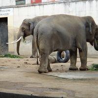神戸で動物園と水族園を満喫しよう!