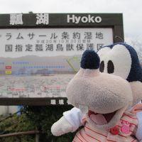 グーちゃん、新潟へ行く!(瓢湖、アヒルさん?との出逢い編)
