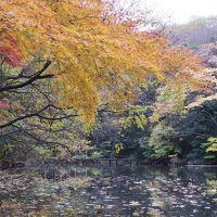 美術にぶるっ! 三四郎池はモネの庭