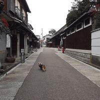 富田林寺内町をちょこっとお散歩♪withワンコ