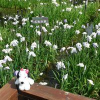 2012年季節の花だより◆『山田池公園』でハナショウブ鑑賞(大阪府枚方市)