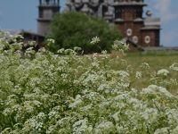 ロシアの世界遺産No.9 : オネガ湖に浮かぶキジー島の木造教会建築群