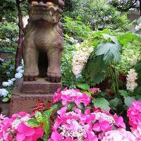 <梅雨の東京散歩>白山神社のあじさい祭り&巣鴨・おばあちゃんの原宿へ