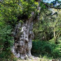 ゴールデンウィークの屋久島(その3、縄文杉登山から白谷雲水峡へ)