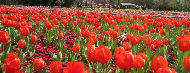 ★★ Canberra Floriade 2013 - キャンベラ ...