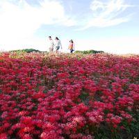 <おひとりさまのお伊勢参り・3> 真っ赤な彼岸花とごんぎつねの故郷「半田」