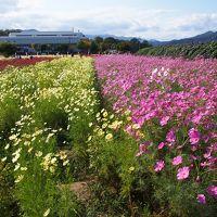 新しい「のーとくん」で京都丹波・亀岡の夢コスモス園へ