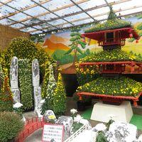 信州須坂の豪商の館「田中本家」と臥竜公園の菊まつり