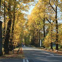 晩秋の伊那路!「ゆりの木並木」を訪ねてby信州大学農学部