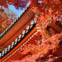 2013年大阪の紅葉~牛滝山 大威徳寺で紅葉狩りだにゃん