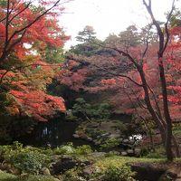 紅葉狩り、まだ間に合うかなぁ・・・・、とにかく出かけました。国分寺プチ散歩