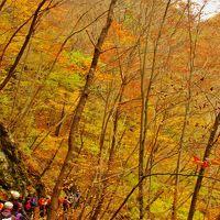 吾妻渓谷2/3 吾妻峡の絶景=小蓬莱に登って ☆落葉舞い散る林間