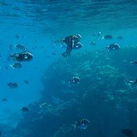 エジプト 〜シャルム・エル・シェイク Hilton Shark Bay Resortの休日