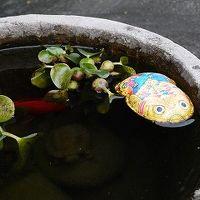 【じわじわ熊本】大人の人吉冬遊び