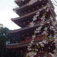 半年振りの高知。今回は、色々観光しました�(2日目その3:高知市観光てんこ盛り。「竹林寺」「牧野自然植物園」「武市半平太生家」などなど〜)