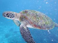 プーケット、ピピ島、シミラン諸島 ビーチ三昧の一週間母子旅行 4日目